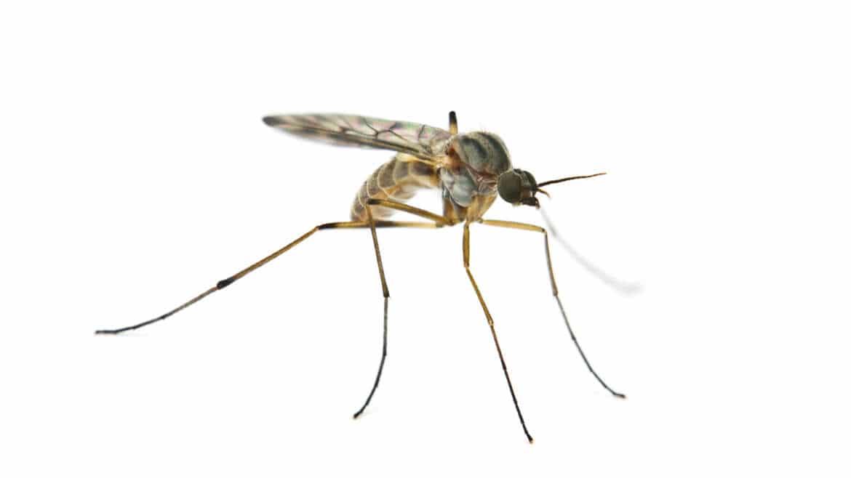 zwalczanie komarów warszawa, odkomarzanie