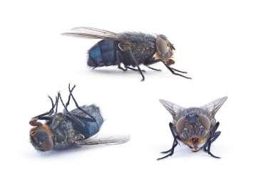 Muchy flies HC96TWB 370x252 1